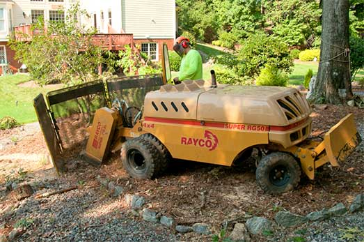 Redfern Tree Service removing a stump.