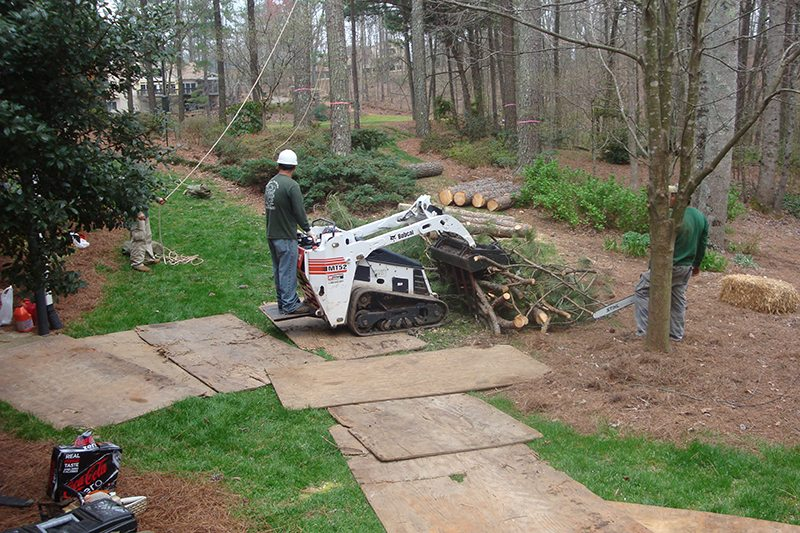 Small dingo machine used to remove logs from the back of the property where access with equipment is minimal. Here you can see that Redfern lays plywood to protect the lawn.