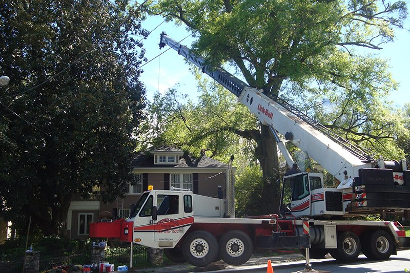 Crane work being performed by Redfern Tree, Inc. on a 200 year old oak at Ansley Park