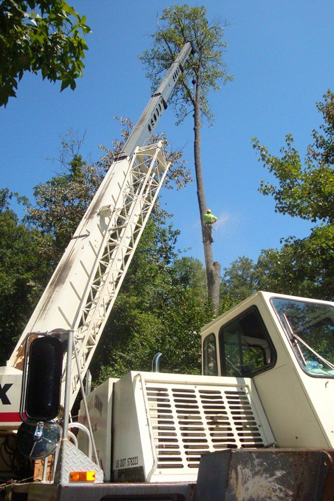Crane work to remove trees from a difficult area.
